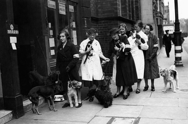 Women queue with their pets at a Narpac (National Air Raid Precautions Committee) post in Holborn, London, 1940