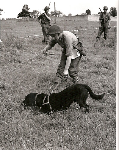 Pet dog loaned to army to sniff out mines in 1944